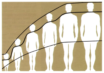 Diagram showing the proportions in body height at different ages.