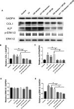 Lactoferrin promotes osteogenesis of MC3T3-E1 cells induced by mechanical strain in an extracellular signal–regulated kinase 1/2–dependent manner