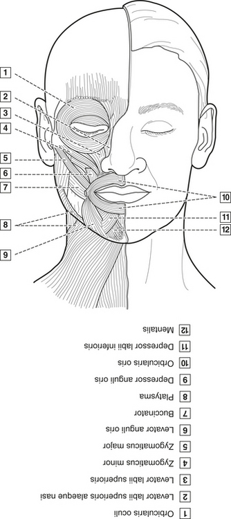 4 Head Neck And Dental Anatomy