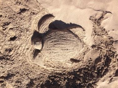 Sea turtle sandcastle