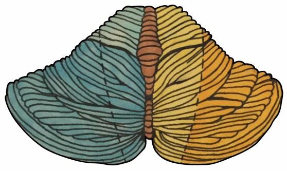 Cerebellum - Posterior View