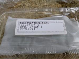 おまかせ浮き草3種