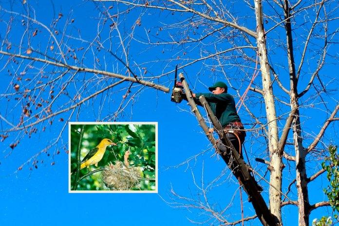 tagliano-alberi-nidi-distrutti