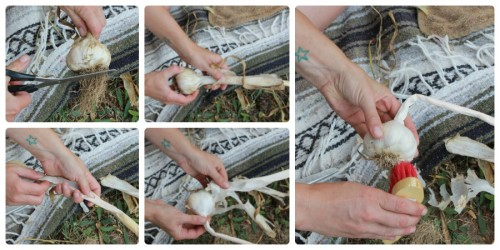 Carefully remove the outer 1-2 wrappers, leaving plenty on the bulb for long storage