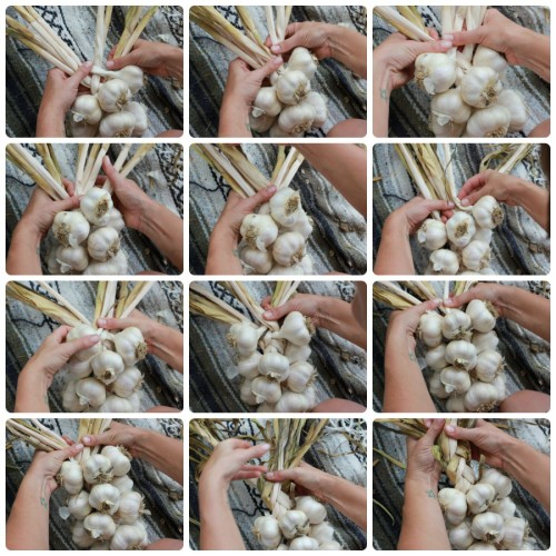 How to braid garlic - illustrated