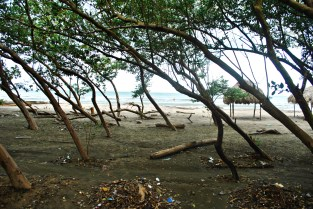 The eco-boardwalk travels through a stand of mangroves (that's what these are, right?) to the beach on the other side.