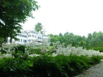 View of the house from the Italian garden. Astilbe is actually really fragrant when there is so much of it in bloom!