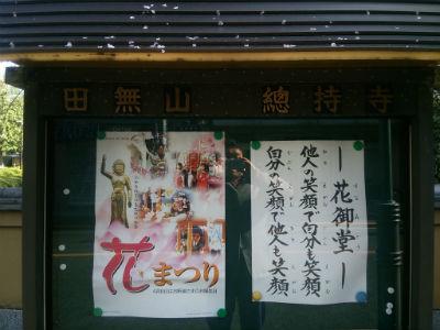 20150406 総持寺しだれ桜2