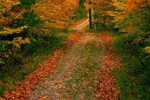 Extended Fall Foliage Season Bike Tours only $19.95