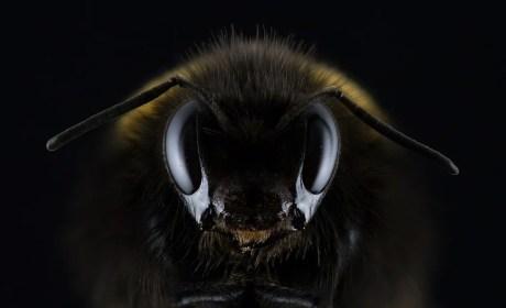 Syndrom owadzi