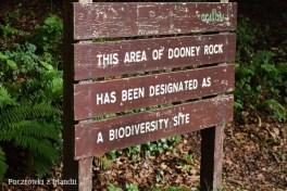 dooney rock 102