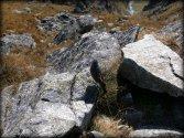 Na Szpiglasowym Wierchu... wrzesień 2012