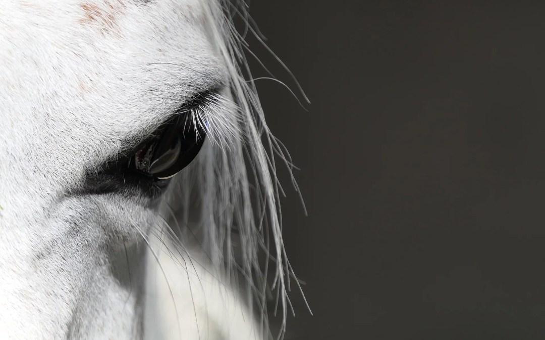 Tao, la deuxième vie d'un cheval artiste