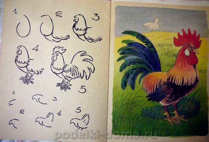 Cómo dibujar un gallo