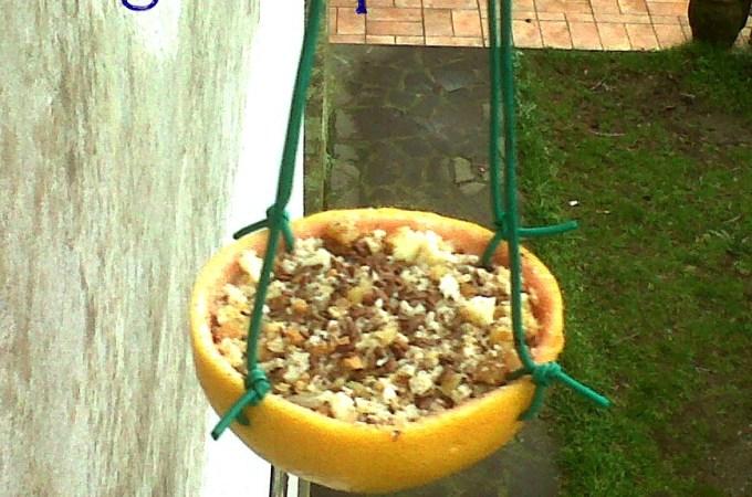 Mangiatoia per uccelli fai-da-te con un pompelmo