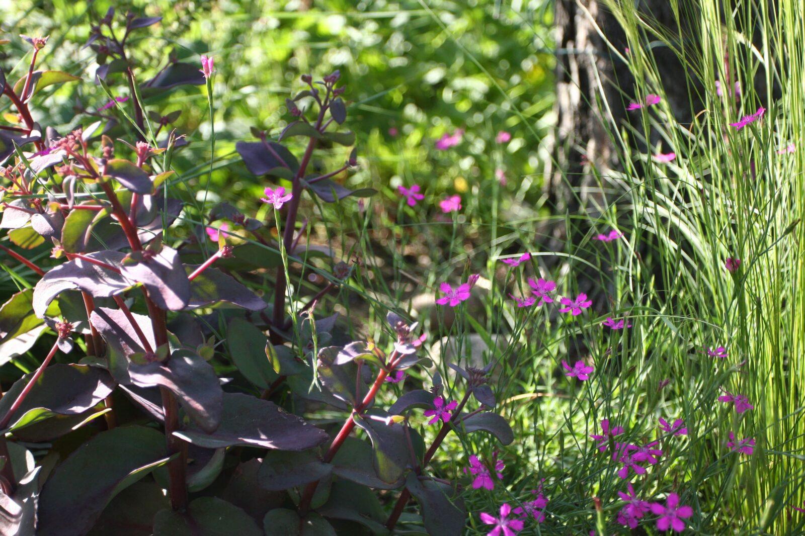 ogród Joli 21