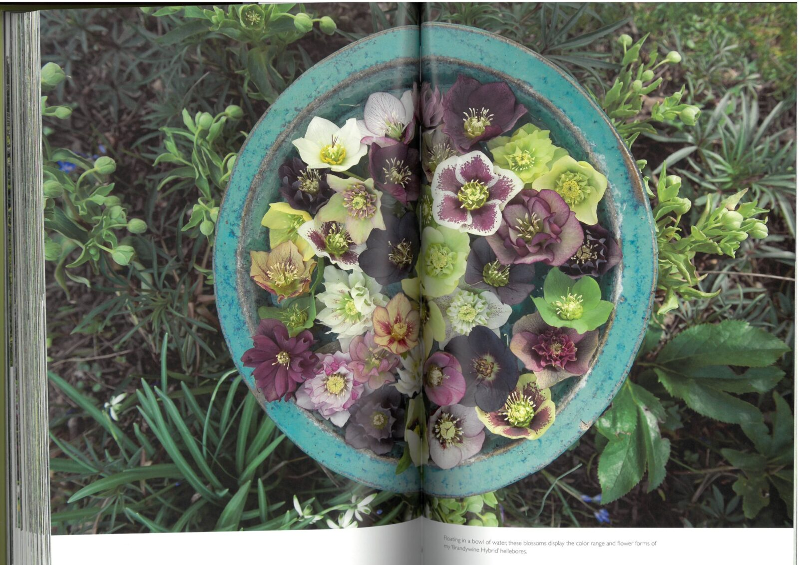 the layered garden - ciemierniki