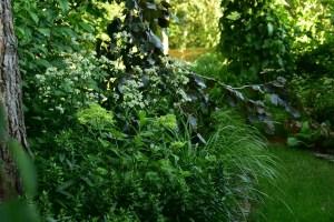 ogród cienisty Izy - lipiec; ogród w cieniu, jarzmianki, hortensja
