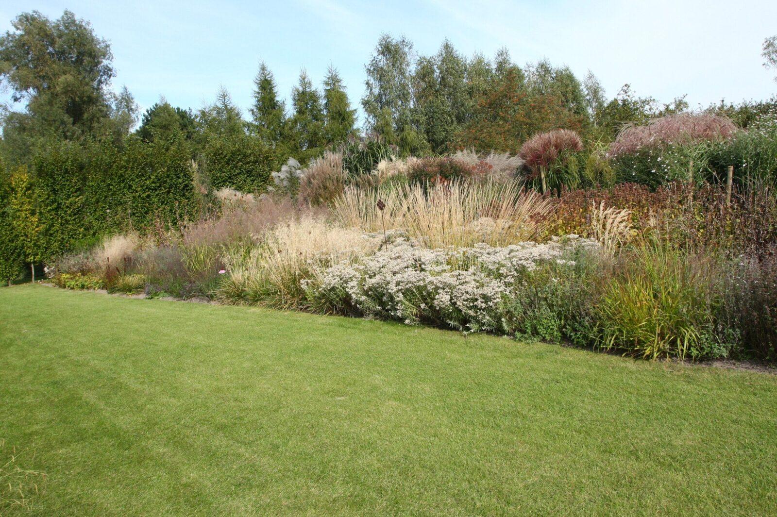 anafalis i trzcinnik w ogrodzie Daglezja