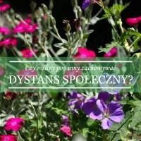 Dystans społeczny czyli w jakich odległościach sadzić rośliny
