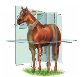 Plans et Axes cheval
