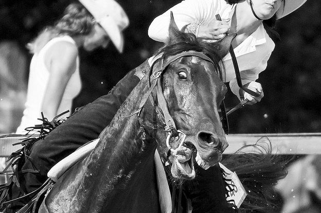 barrel-racer-abuse-624x414
