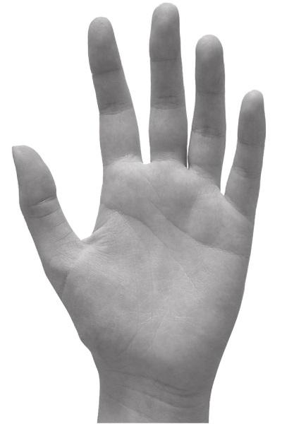 Форма руки сексуальный темперамент