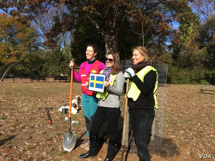 Eva Hunnius Ohlin, right, senior adviser for energy and environment at the Swedish Embassy, with two of her colleagues insisted on Swedish sovereignty in their planting effort. (Natalie Liu/VOA)