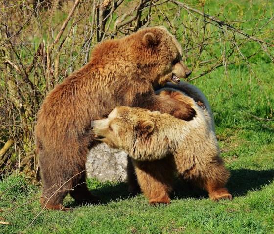 bear-1327868