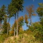 Co wiemy o drzewach