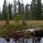 Topielsko wciąga nie tylko urodą – rezerwat koło Zieleńca