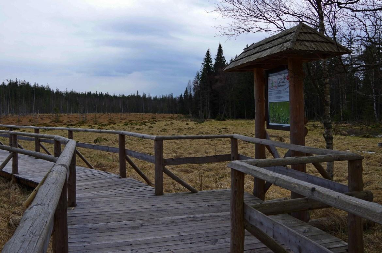 rezerwat torfowisko6