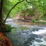 Rezerwat Szumów w Środkowym Roztoczu- wsłuchaj się w naturę