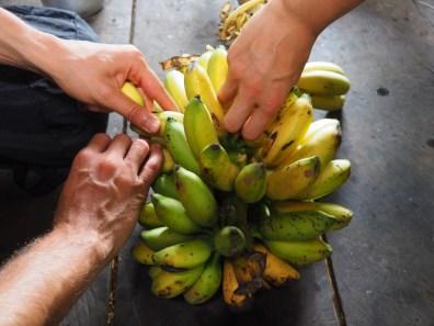 banana, ecuador