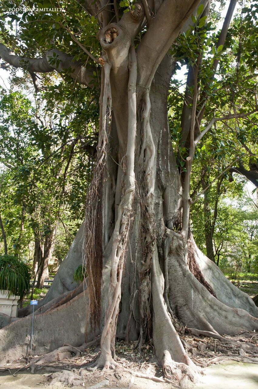 Ogród Botaniczny w Palermo - kwitnące muzeum na świeżym powietrzu