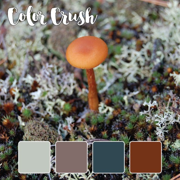 color_crush_8-19-15_mushroom