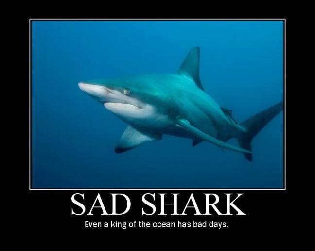 sad-shark