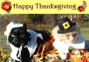 thanksgiving-cat-300x210