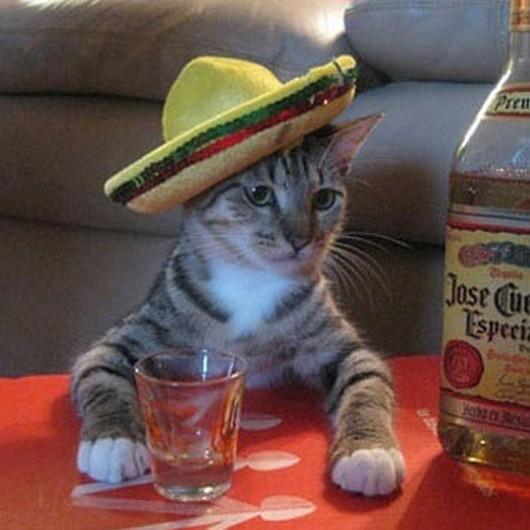 cat-with-sombrero