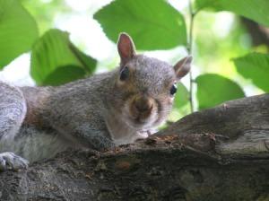 squirrel_s1