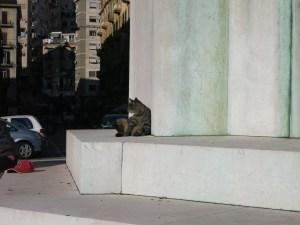 Neapolitan cat don't care