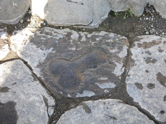 Pompeii penis