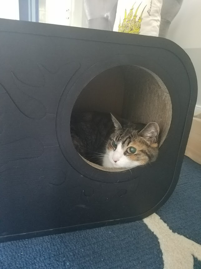 Cubby cat.jpg