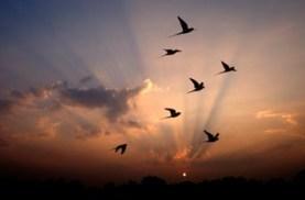 Oiseaux dans l'orage