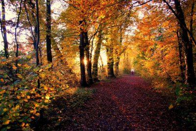 The Road Not Taken Summary In Hindi – Robert Frost