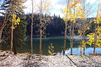 Aspen trees by lake