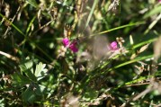 1920-wildflowers-more-purple