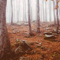 Sonetos e Frases de Outono