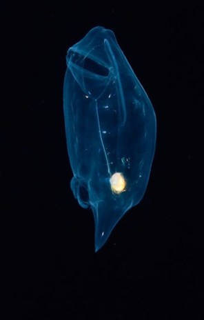 Glowing-Creatures-in-Black-Water-11