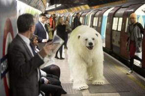 Polar-Bear-in-London2